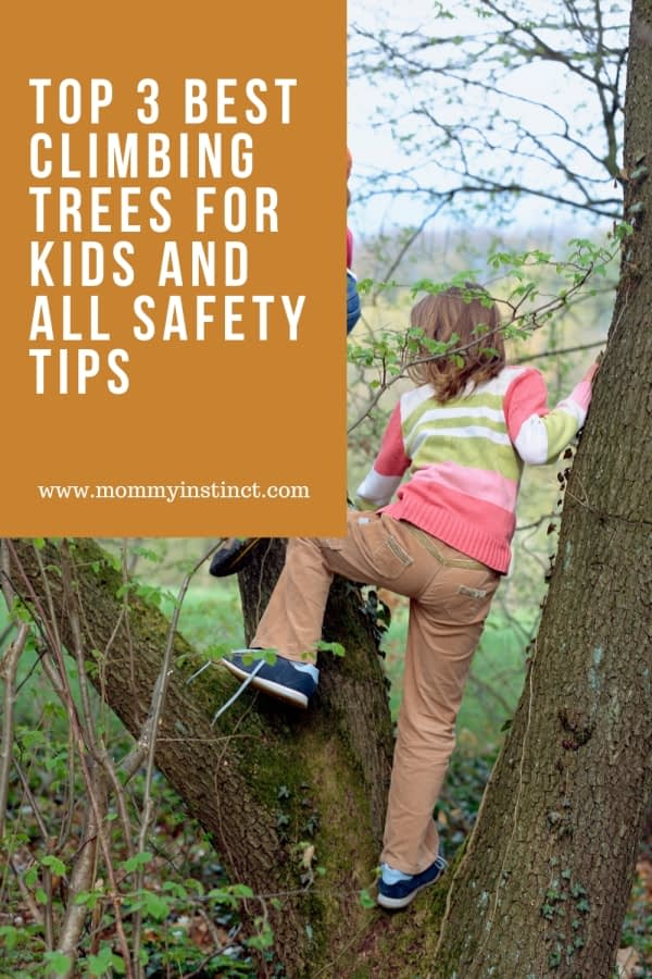 Optimized-Top 3 Best Climbing Trees For Kids And All Safety Tips